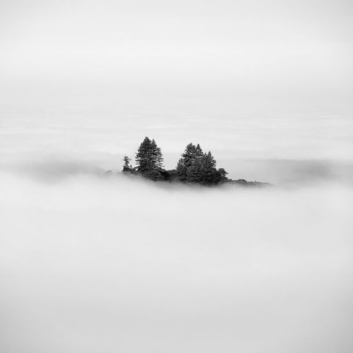 Island of trees above a sea of fog. Looking out from Windy Hill Preserve towards Pacific ocean. Skyline Trees Blackandwhite Fog Forest Hazy  Island Isolation negative space Sky Tranquil Scene Tranquility Tree White Background