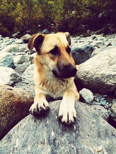 Close-up of dog resting on rock