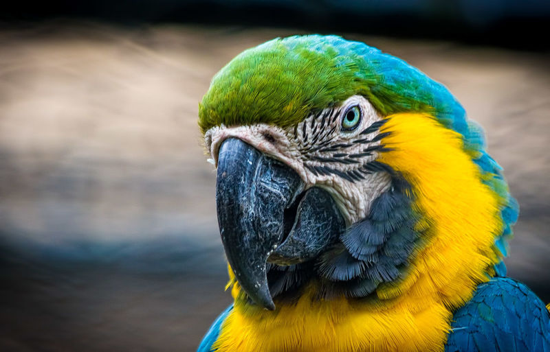 Close-Up Portrait Of Macaw