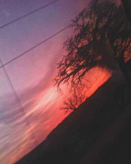 Sunset Nature Tree Beauty In Nature No People Low Angle View Outdoors Red Beauty Branch Sky Day Scenics Backgrounds The Week On EyeEm Picoftheday Tree Beauty In Nature Photography EyeEmNew Here Naturelovers Photographer Photooftheday Multi Colored Nature