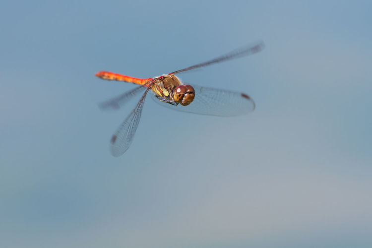Close-up of dragonfly flying