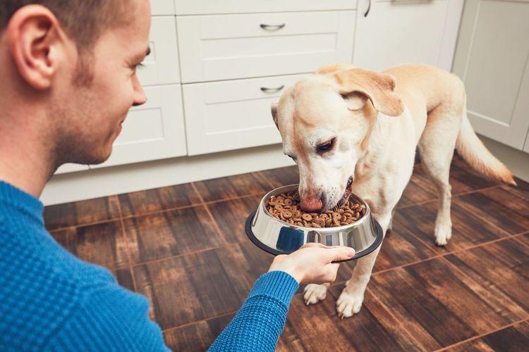 Close-Up Of Man Feeding Dog At Home