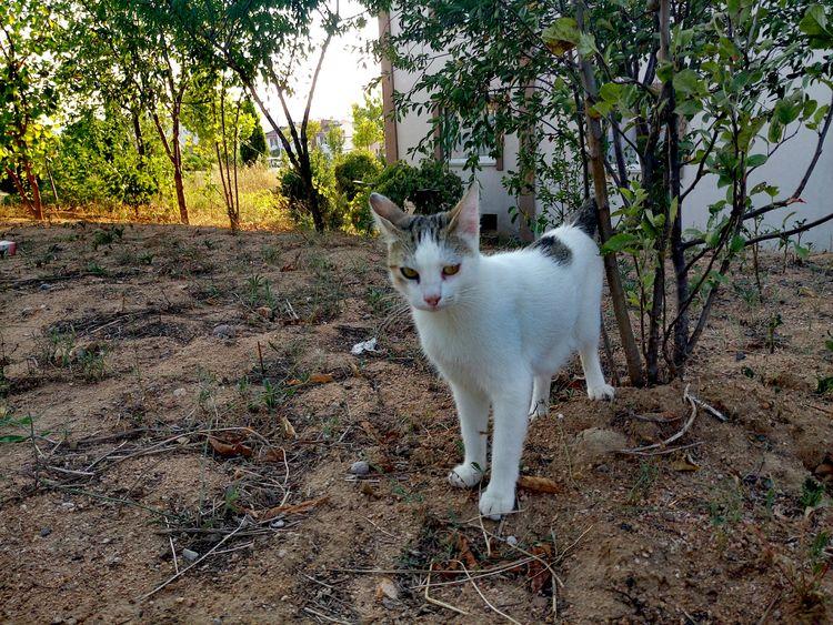 Kedicik 🐈 Kedidelileri Kediseverler Kedi Aşkı Kediler Kedicik Kedi Cat Lovers Cat♡ Cats Cat