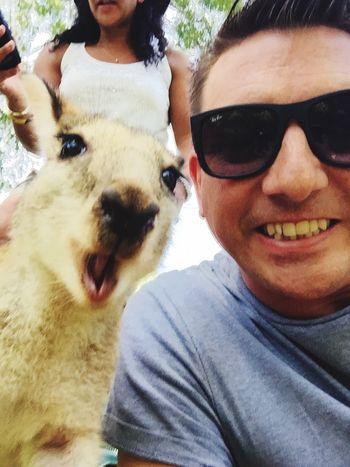 Wallaby photo bomb