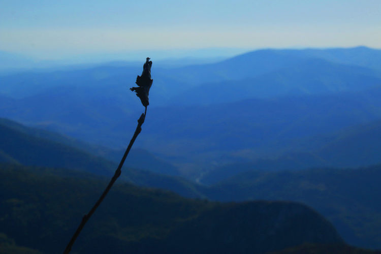 Silhouette bird flying over mountains against sky
