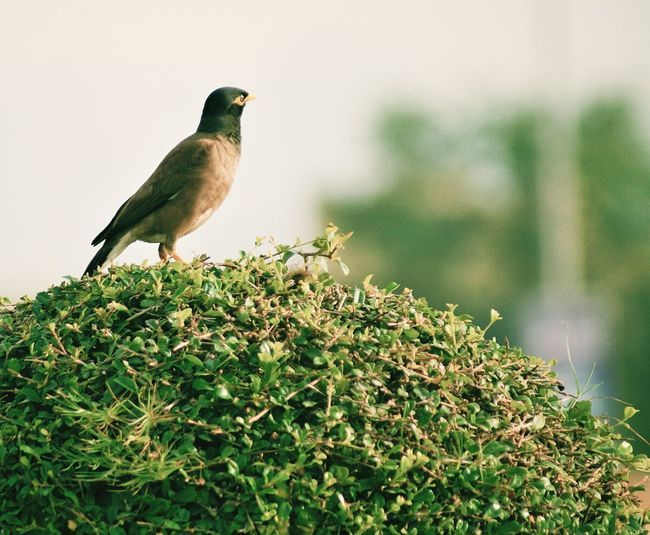 Taking Photos Hello World Fujairah Naturelover