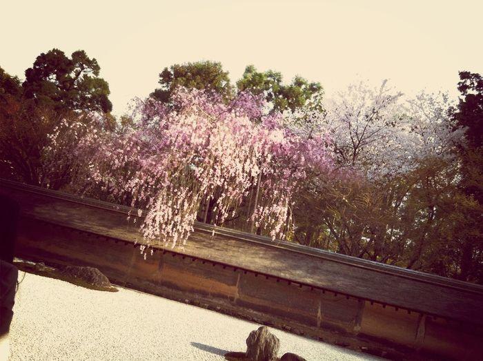 At 龍安寺 Ryoan-ji Temple