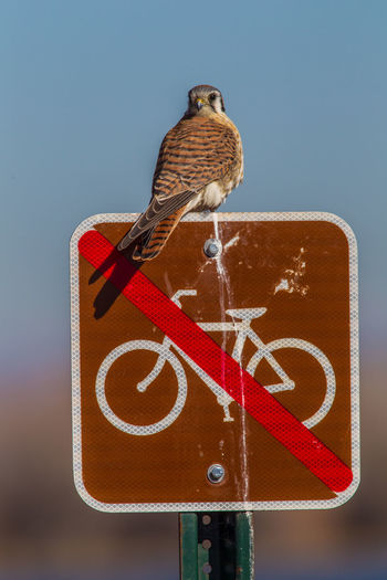 Close-up of bird perching on road sign against sky