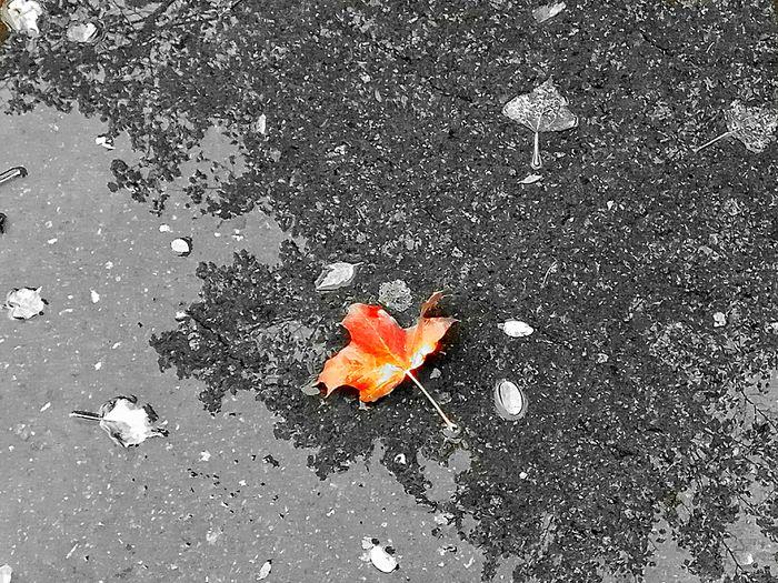 осеннийлисток Nature осень