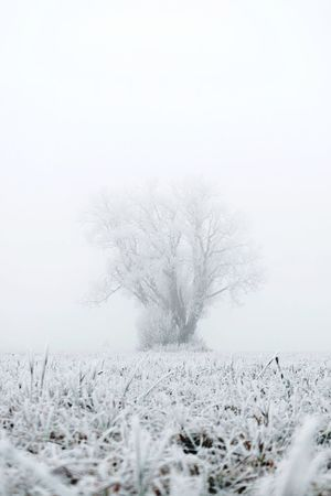 Winter Cold Temperature Snow Tree Plant White Color Beauty In Nature Tranquility Nature Tranquil Scene No People Day Covering Scenics - Nature Environment Extreme Weather Copy Space Field