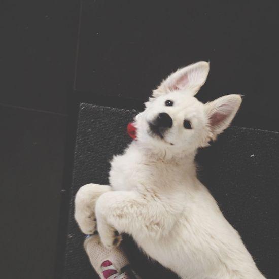Douggy dog 🐶