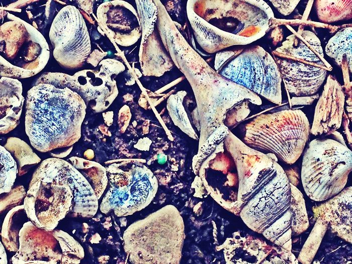 I may be broken but I'm not useless. I've seen better days yet they could have been worse. I am alive....Don't give up on me. Ⓒ Kimberly LaChat. Sea Shells Seashells Life And Death Time Time Waits For No One. Terminallyill Memories Reflections Nevergiveup Nevergivingup
