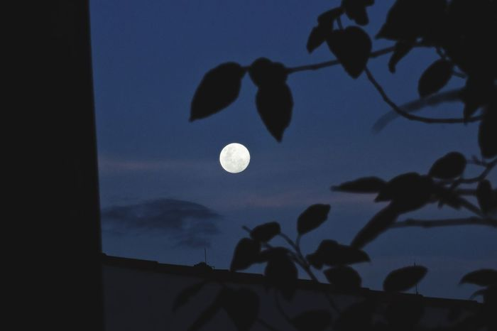 Moon Sky Night Low Angle View Nature Astronomy Space No People Moonlight