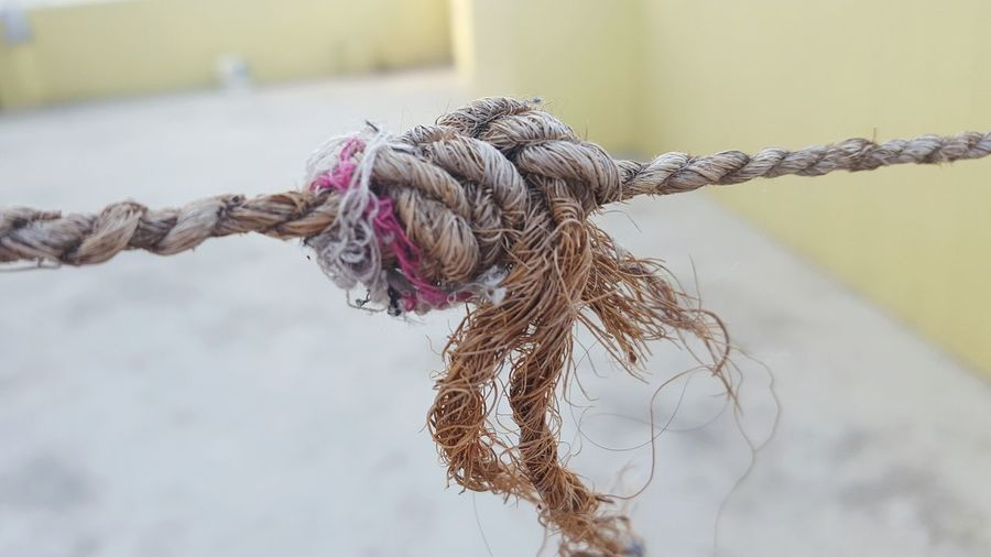 Close-up of knot on rope