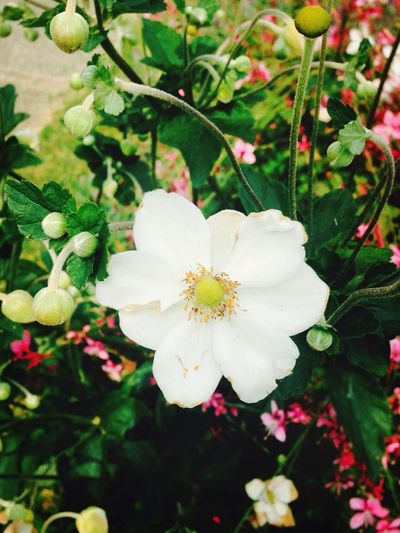 Flowers Check This Out Nature Eye Em Nature Lover