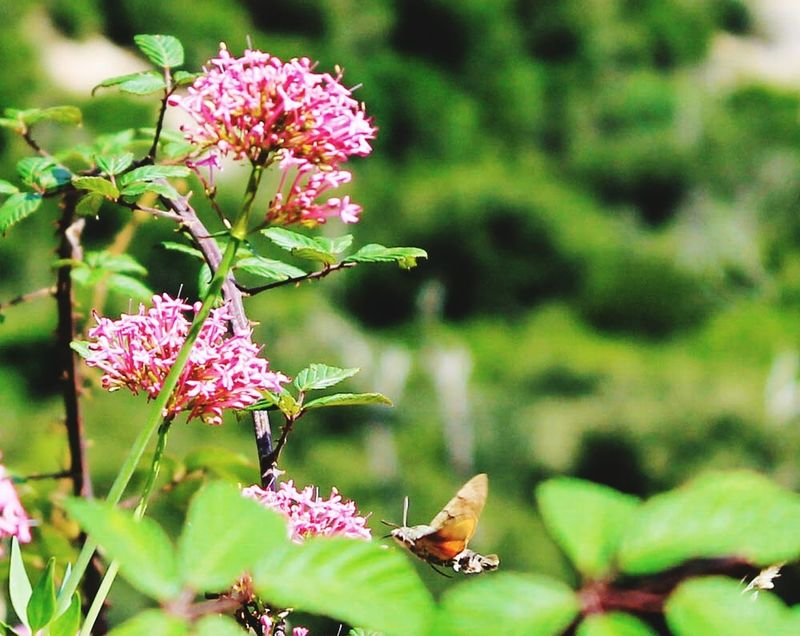 Butterfly Butterflies Insects  Bugs Flying Macro Macro_collection Flowers Nature