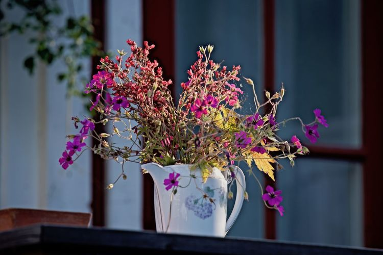 Summer Architecture Beauty In Nature Building Exterior Close-up Day Decoration Flower Flower Head Flowers In A Teapot Focus On Foreground Fragility Freshness Growth Nature No People Outdoors Pink Color Window