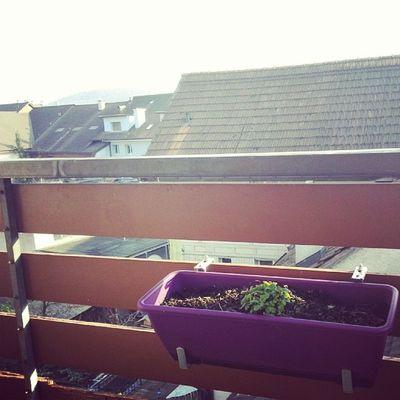Daserstemal in diesem jahr gemütlich auf dem Balkon sitzen ?????? Freu Cgbmarch14