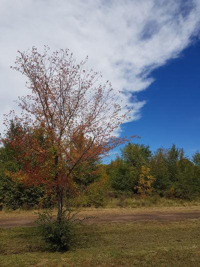 otoño Landscape Otoño Paisaje Otoñal Autumn colors Sky Cloud. Flying Bird Tree Sky Cloud - Sky Farmland The Great Outdoors - 2018 EyeEm Awards