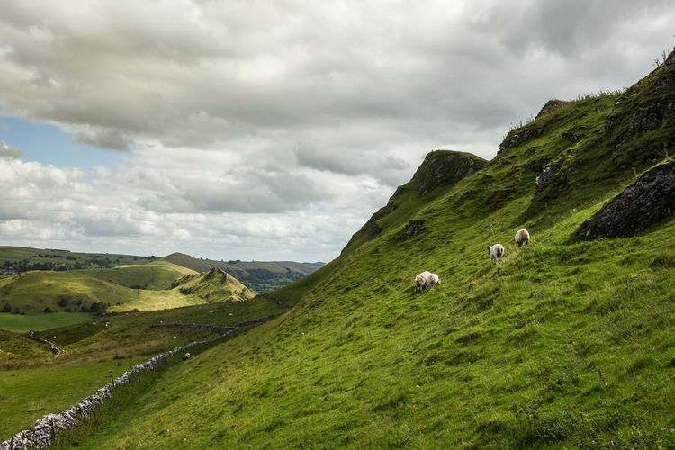 Chrome Hill and