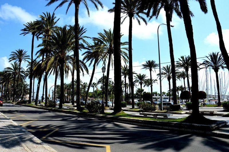 Palma De Mallorca Mallorca🌞 Relaxing Spain ✈️🇪🇸 Beautiful Place Palma PalmadeMalllorca
