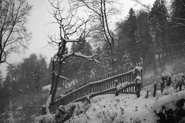 Tree Winter Bare Tree Snow Nature Branch Outdoors Cold Temperature Snowing Day Sky No People
