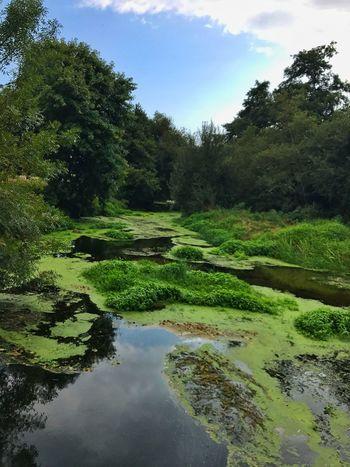 Nature Green Color Green Green Green!  Water River Riverbank