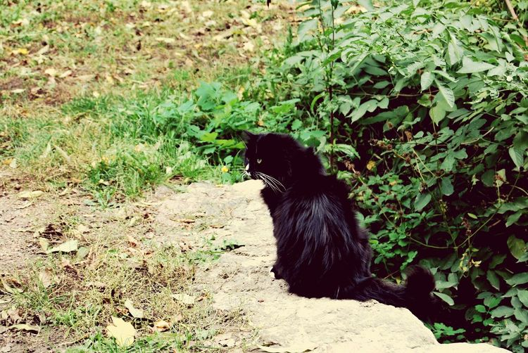 Animal Themes One Animal Green Color Black Color Grass Field Day Animals In The Wild Growth No People Outdoors Domestic Animals Pets Cat♡ Black Cat Find A Way To Smile Even After A Bad Day Find A Cat Catoholic Wild Cats Master Of Disguise Beautiful Animals