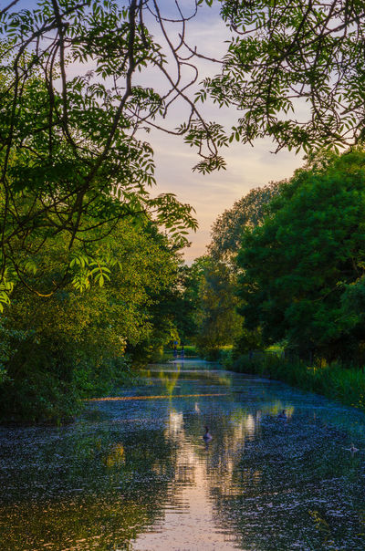 A view down the River Kennet. Beauty In Nature Beauty In Nature Branch Colors Day Forest Growth Landscape Nature Nature No People Outdoors Relaxing River River Kennet Riverscape Riverside Scenics Sky Sunset Tranquil Scene Tranquility Tree Water Waterway