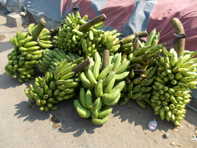 bunches of banana fruits foods on market Banana Bananas Bananas For Sale Bunches Of Banana Day Diet Food Food Food And Drink For Sale Freshness Fruits Green Color Healthy Eating Healthy Food Healthy Fruits Large Group Of Objects Market No People Outdoors Sunlight Tropical Fruit Weight Loss Food