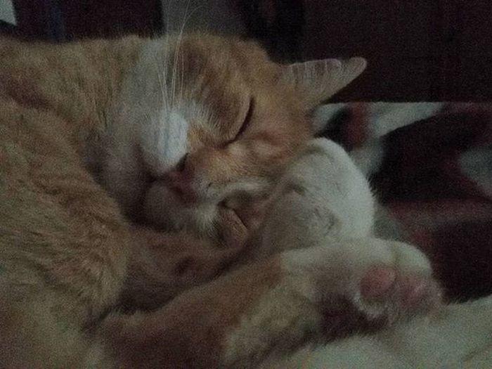 Mylove Romeo Myloveromeo Ilmioamore Mycat Cat Miao Meow Gatto Rosso Gattorosso Gattone Redcat Orangecat 😚 😚 😚 Catoninstagram Cat_of_instagram LeChat Kitty Chat Zampette Paw