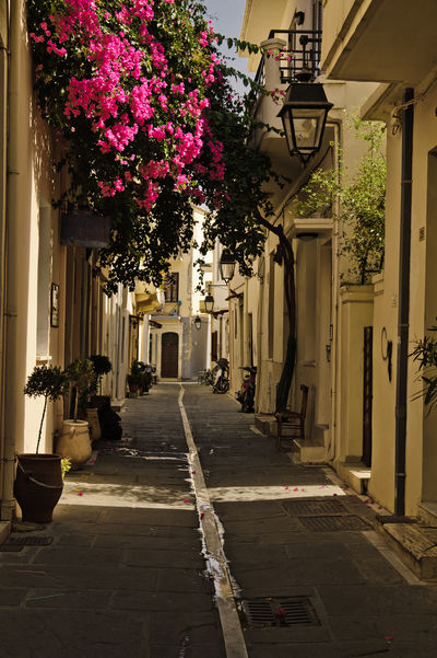 a small alley in Rethymno Greece Alley Architecture Bouquet Building Building Exterior Built Structure City Crete Day Direction Flower Flower Arrangement Flower Pot Flowering Plant Footpath Greece Growth Nature Outdoors Plant Potted Plant Residential District Rethymno Street The Way Forward