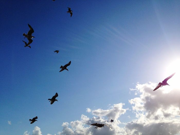 Bird Animal Themes Flying Animals In The Wild Spread Wings Wildlife Blue Low Angle View Sky Togetherness Freedom Flock Of Birds Mid-air Zoology Nature Tranquility Day Sun Sunbeam Migrating Silhouettes
