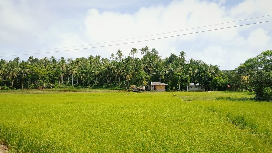 Farming Nipa Hut Provincelife Nature Nature Photography Green Enjoying Life