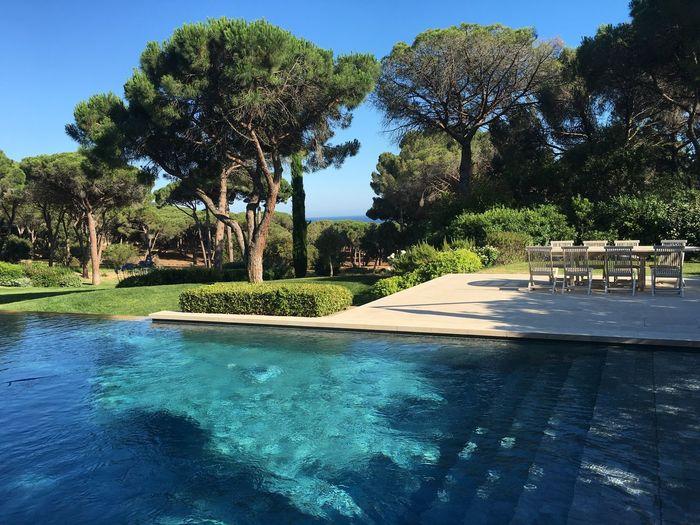 Swimming pool against trees in resort