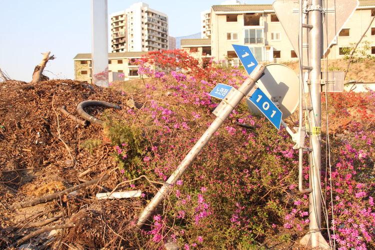 신흥주공아파트 철거 Apartment Architecture Architecture Built Structure City Day Demolition Desolate Destruction Flower No People Residential Building Road Sign Focus On The Story
