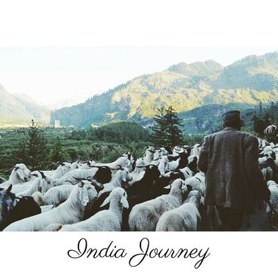 Our task must be to free ourselves by widening our circle of compassion to embrace all living creatures, and the whole of nature.. and its beauty - Albert Einstein Location - Manali, Himachal Pradesh, India IndiaJourney Herd