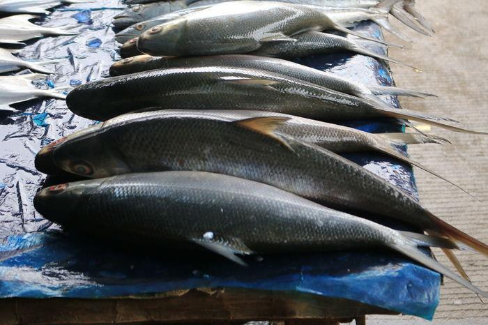fish to cap go meh celebration Capgomeh Destination Turism Visitindonesia Visitjakarta