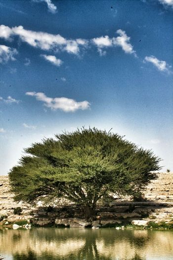 EyeEm Nature Lover Water_collection Trees Sky_collection here in riyadh :)