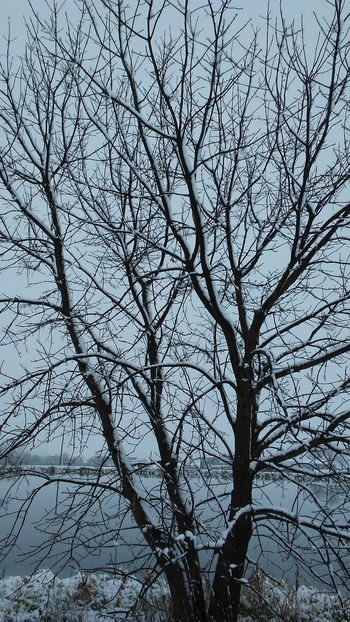 Tree Outdoors Winter Snow Water