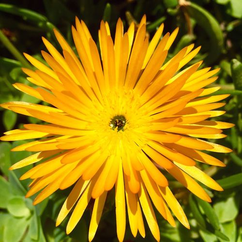 Yellow flower Flower Flowers Yellow Yellow Flower Naturelovers Nature Nature_collection