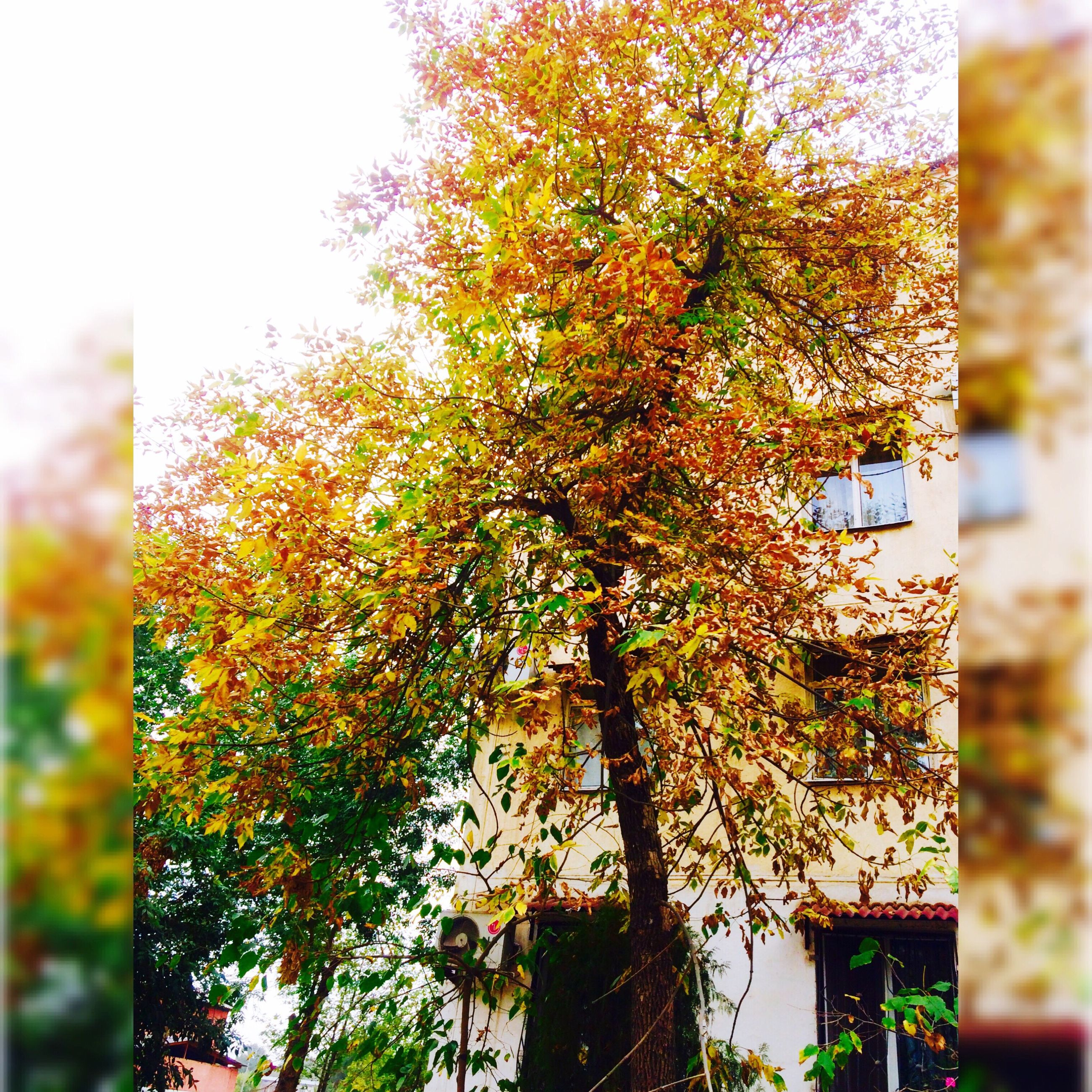 tree, growth, tree trunk, change, day, branch, orange color, growing, beauty in nature, nature, outdoors, multi colored, no people, scenics, freshness, tranquility, green color