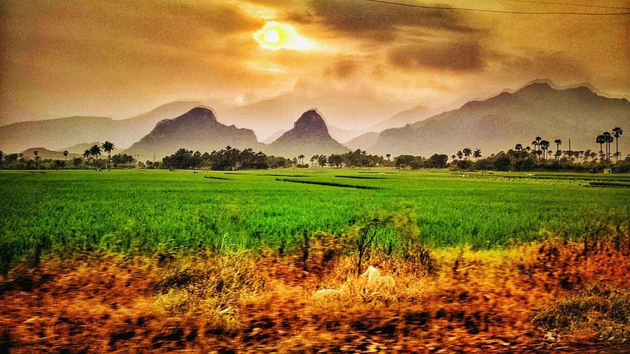 The Adventure Handbook On The Move Golden Hour Indian Beauty Mountains Travel Photography Mobile Photography Tamilnadu Coconut Trees Sunset