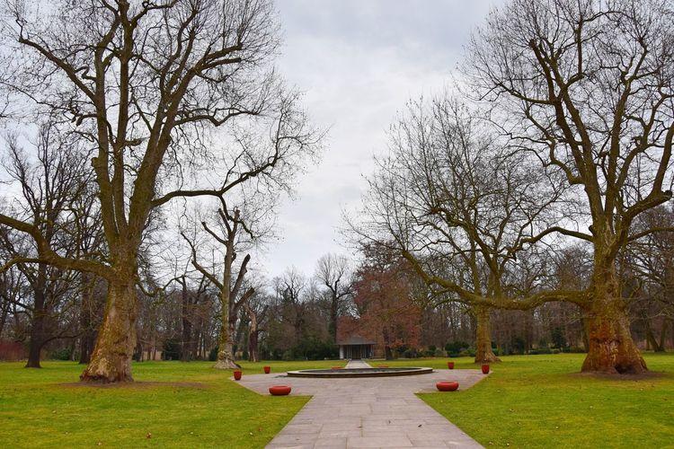 Bare Tree Beauty In Nature Cloud - Sky Day Grass Nature No People Outdoors Park Schlosspark Schönhausen Sky Tree