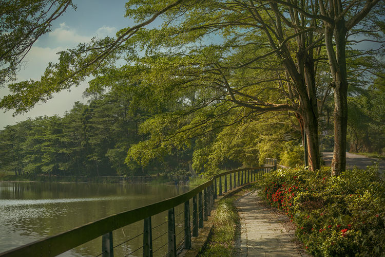 Riverside Autumn Beauty In Nature Branch Day Fall Footbridge Growth Lake Landscape Nature No People Outdoors Railing Scenics Sky Sunny Tranquil Scene Tranquility Tree Water