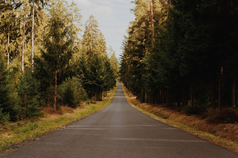 Country road amidst trees and plants