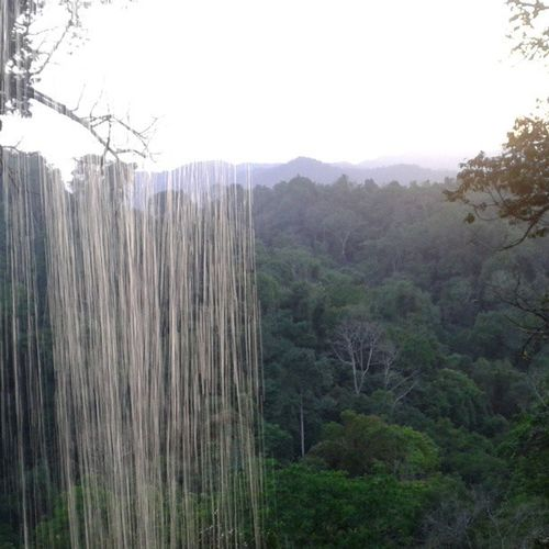 Best shower and view in the world! Bokeo jungle Laos. Shower Shower Time Treehouseview Treehouse Thegibbonexperience LAO Johnnelson Lifeasiseeit Jungle Jungle Trekking