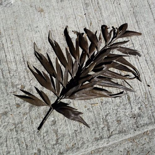 Hoja. Leaf Casual Floor Bw Suelo Byn Hoja Findings Encuentro