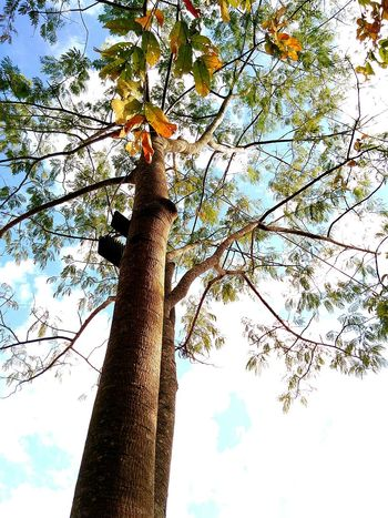 Tree Low Angle View Nature Growth Sky No People Outdoors Tree Trunk Beauty In Nature Day Close-up