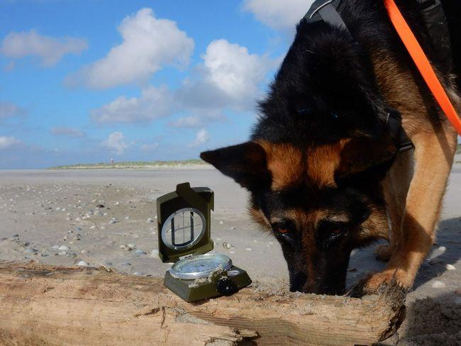 Texel  Niederlande Navigation Kompass Schäferhund German Shepherd Holland Netherlands Nature Natur OutOfHome Outdoor Northsea Nordsee Clock Time Clock Face Water Minute Hand Beach Sea Sand Dog Pets